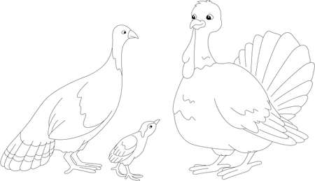 poult: Set of turkey mother, father and poult. Vector illustration for kids. Coloring book