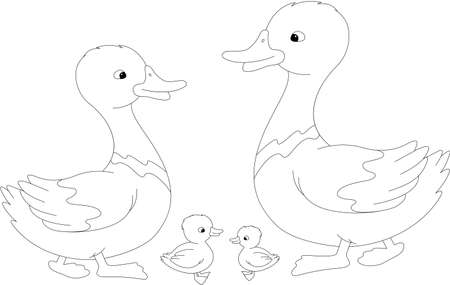 duckling: Set of duck, duckling and drake. Vector illustration for kids. Coloring book