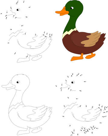color image mallard duck: Cartoon duck. Coloring book and dot to dot educational game for kids