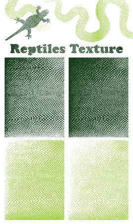 Reptile Skin Texture 向量圖像