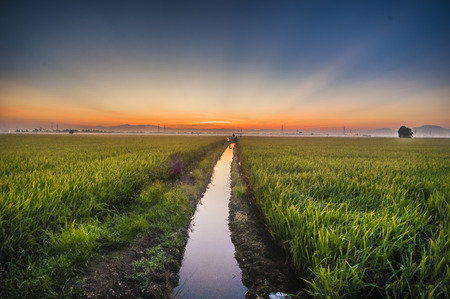 river at paddy field