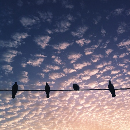 Sunset and bird Stock Photo