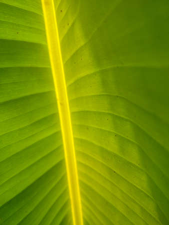Green leaves photo