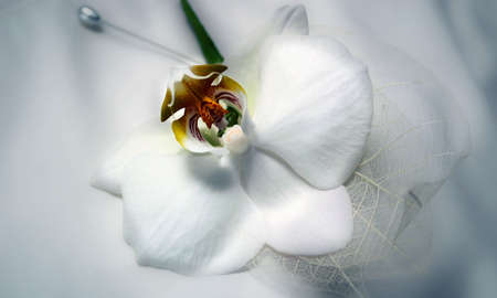 buttonhole: grooms white orchid buttonhole