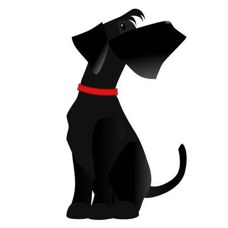 large dog: Vector dog breed Giant Schnauzer color black isolated in the white background