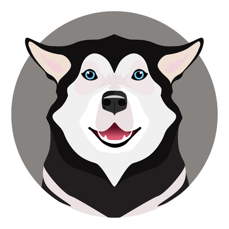 Adorable black and white with blue eyes Husky on circle frame Illustration