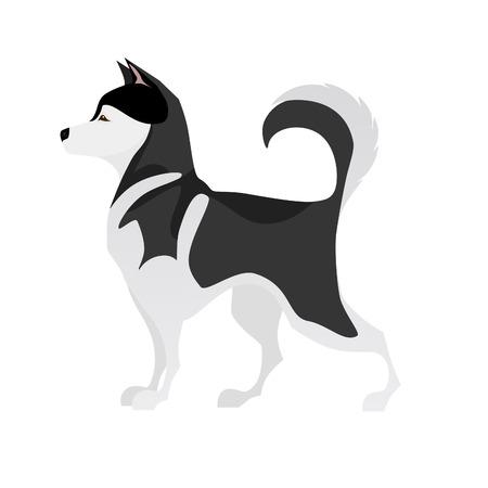 黒と白の若いペット ハスキーを分離