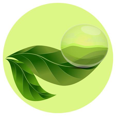 rain drop: Rain drop of clear water on a green leaf Illustration