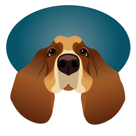 tiredness: Cute Basset Hound isolated on circle blue frame