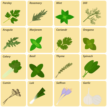 Vector set of herbs and spices  labels. Logo collection. Çizim