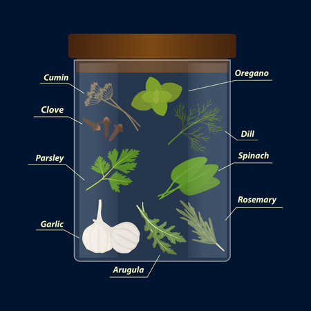 Vector set of herbs and spices in glass jar