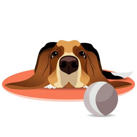 Sad basset hound on circle pink mat and ball