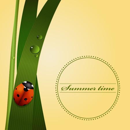 dew: Green grass, stem, dew drops, cute ladybug. Summer season. Vector illustartion.