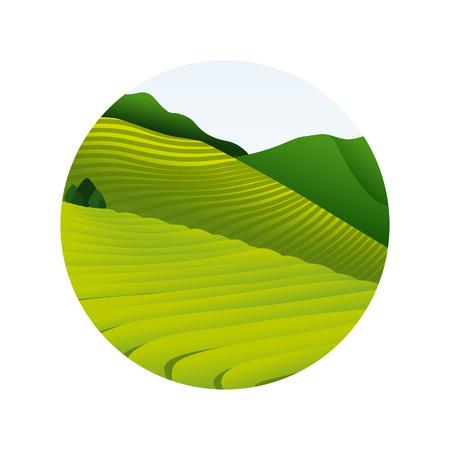 plantation: Tea plantation in morning view. Green hill. Vector illustration.