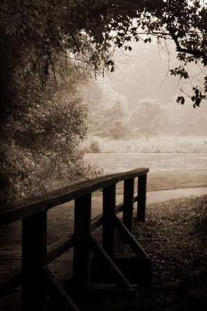 clearing the path: A small wooden footbridge leads out of the dark woods and into the light of a meadow.