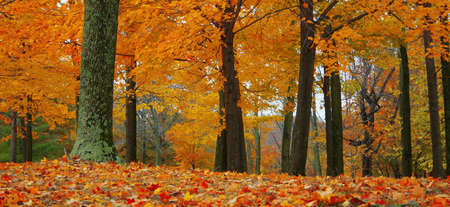 Add fiery warmth to any project with this autumn scene. 스톡 콘텐츠