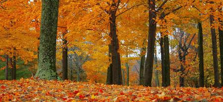 Fügen Sie feurige Wärme in jedem Projekt mit diesem Herbst-Szene.  Standard-Bild - 611325
