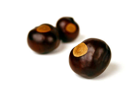 Buckeye nuts from the official tree of Ohio Stock Photo