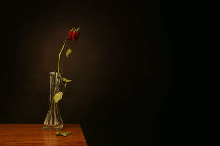 bereavement: A wilting rose signifies lost love, divorce, or a bad relationship Stock Photo