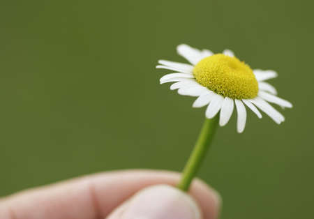 Fingers hold a daisy, care for the environment Imagens