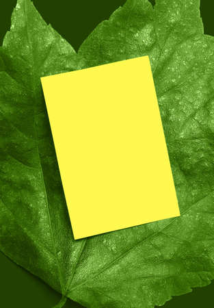 Yellow card on bright green leaf for your Spring message. Imagens
