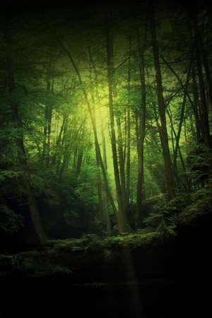 möglicherweise: Ein Wald von Mysterium, Magie, Zauber, und vielleicht einige Hobbits.