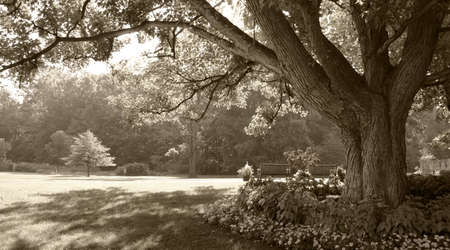 Large tree in sepia-toned park scene Stock Photo