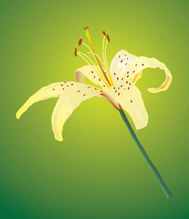 One yellow lily. Vector illustration