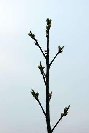 dissolved: Il ramo per essere disciolti reni. Foto