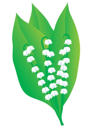 A bouquet of lily of the valley. Vector illustration Vector