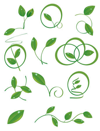 A set of green leaves to the design. Vector illustration Vector