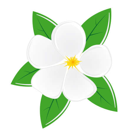 the magnolia: White magnolia flower with leaves. Illustration