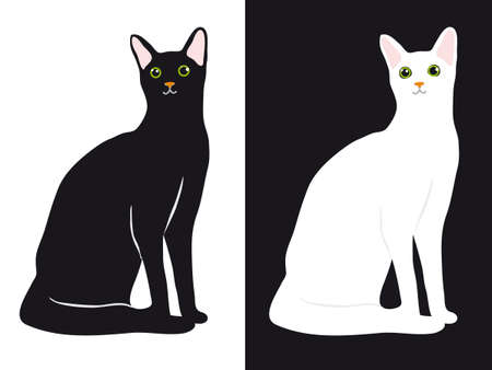 A set of black and white cats. illustration Vector