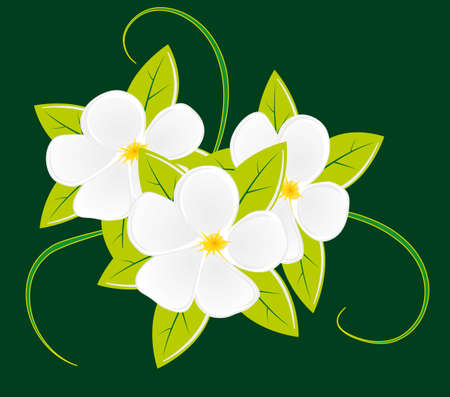 Bouquet of three white flowers. illustration Vector