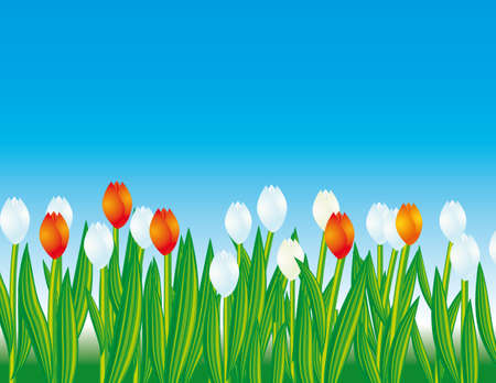 tulips in green grass: Meadow with red and white flowers. illustration Illustration