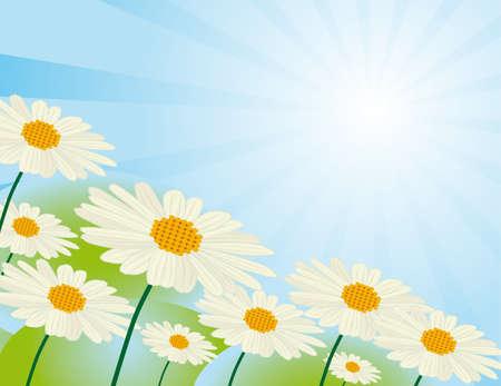 naturism: Chamomile flowers against the sky  Illustration