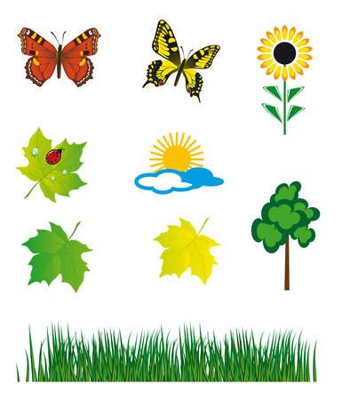 Set of natural elements for design. illustration Vector