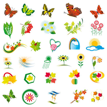 A collection of natural elements for design. Vector illustration Vector