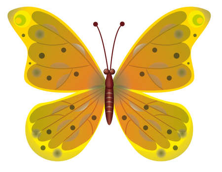 A beautiful yellow butterfly isolated.  Vector illustration Stock Vector - 8223405