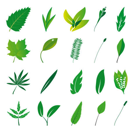 naturism: Collection of isolated green leaves. Vector illustration