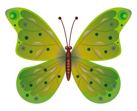 naturism: A beautiful green butterfly Illustration