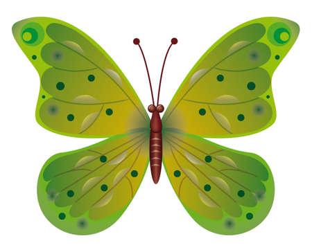 mariposa verde: Una hermosa mariposa verde