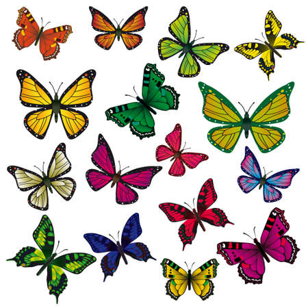 naturism: A collection of colorful butterflies. illustration Illustration
