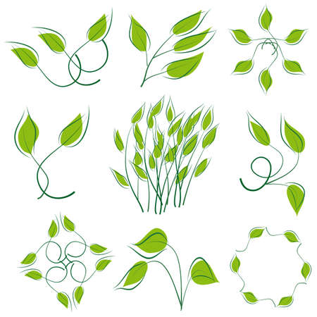 naturism: A set of green leaves to the design. illustration