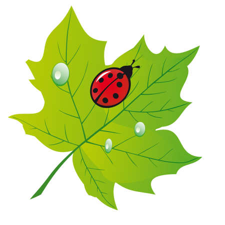 Ladybird on a green leaf. illustration Stock Vector - 8892868