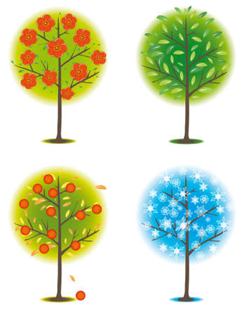 naturism: One tree in different seasons. Vector illustration