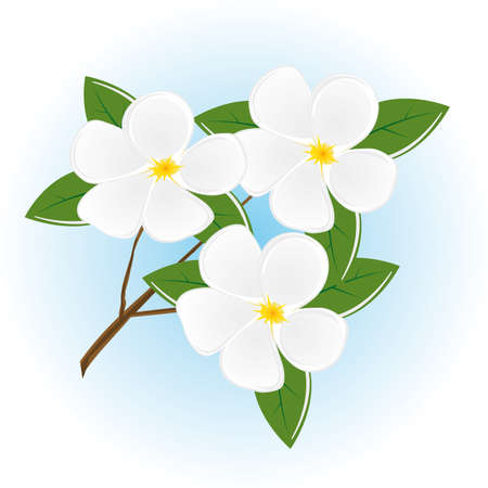 The branch of a tree with white flowers. Vector illustration Vector