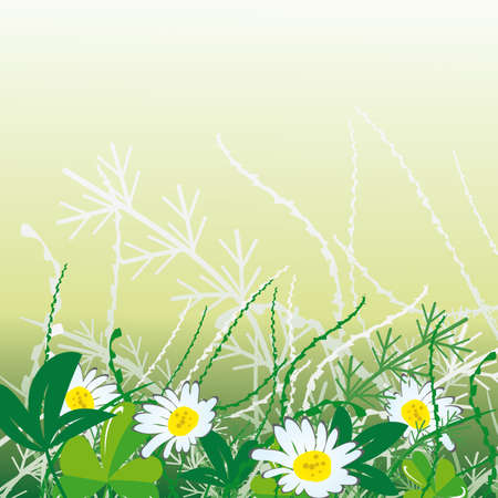 naturism: White camomiles in green grass. Vector illustration