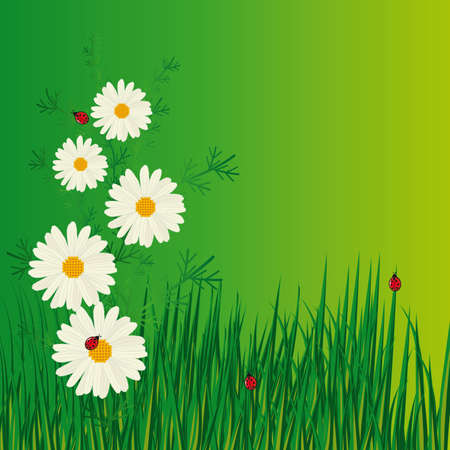 naturism: Daisies and ladybugs in the grass. Vector illustration