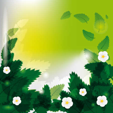 naturism: White flowers among green leaves. Vector illustration